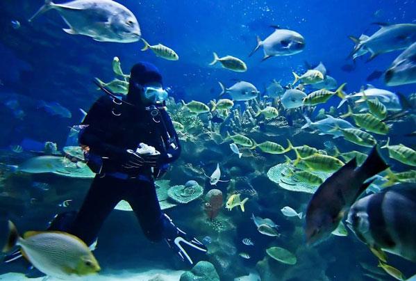 Diving-in-New-Zealand-1 — SEVENSEAS Media